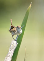 Bird Eating a Dragonfly for Lunch