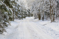 Winter dirt road through the forest with snow and frost