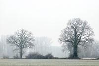 Ein Nebeltag im Münsterland