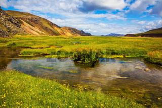 Green grass among hot springs