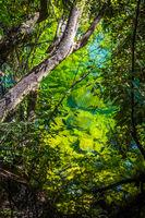 River in Abel Tasman National Park, New Zealand