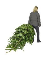 woman and christmas tree