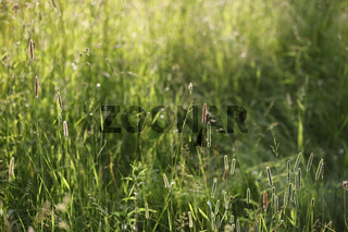 Landscape is summer. Green trees and grass in a countryside land