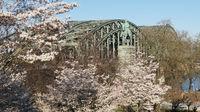 Hohenzollernbrücke im Frühling, Köln, Deutschland