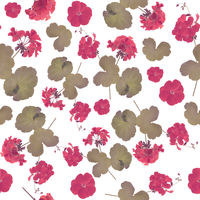 seamless   pattern of geranium flowers