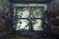 Fenster mit Spinnenweben
