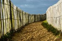 Coastal sandy trail