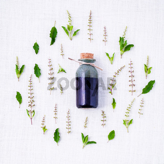 Bottle of essential oil with fresh holy basil leaves and flowers setup with flat lay on white fabric.