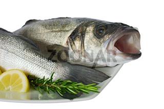 Wolfsbarsch - dicentrarchus labrax - sea bass