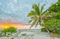 Sonnenuntergang unter Palmen am Fort Zachary Taylor Historic State Park in Florida