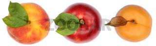 Pfirsich Nektarine Aprikose Früchte von oben Freisteller freigestellt isoliert