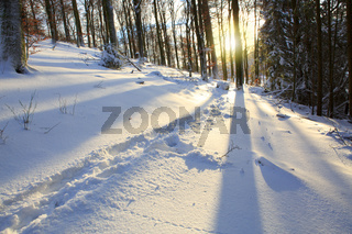 Sunset in a winter forest.