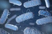 Enterobacterias. Gram-negative bacterias escherichia coli, salmonella, klebsiella, legionella, mycobacterium tuberculosis, yersinia pestis,  and shigella, proteus, enterobacter, serratia, and citrobacter.