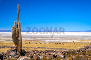 Cactus and a salar