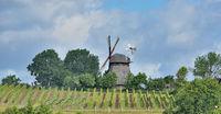 Windmuehle und Weinberg in Grebin bei Ploen,Holsteinische Schweiz,Deutschland