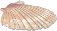 Vector Seashell
