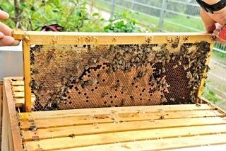 nachsehen nach unseren fleissigen Bienen.jpg