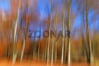Herbstwald abstrakt