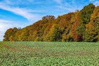 Autumn in the National Park Saxon Switzerland