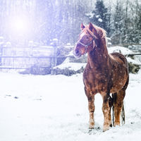 there is a horse standing on the snow