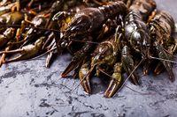 Fresh crayfish close-up