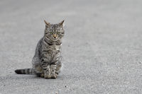 Portrait of shaggy cat on a grey asphalt road