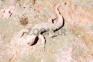 Echse auf dem Sandstein