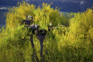 Storchenpark Hunawihr, Elsass, France
