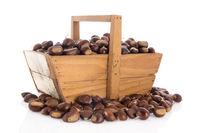 Sweet chestnuts in harvest basket