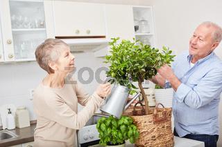 Paar Senioren pflegt einen Obstbaum