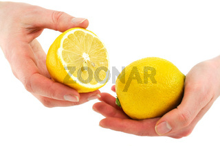 Woman's hands holding citrus fruits (lemon) isolated