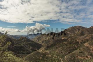 Aufforstung von Wald im Gebirge von Gran Canaria
