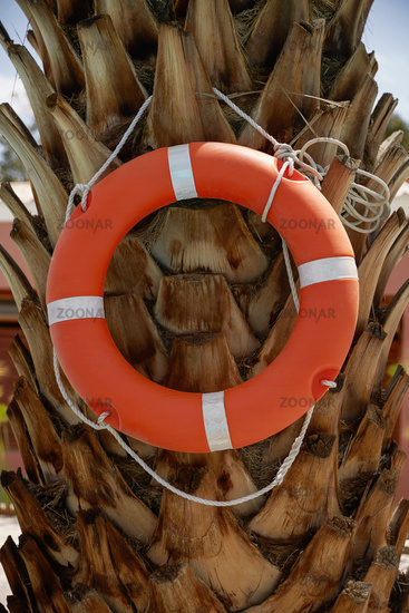 Life Ring Buoy Hanging on A Palm Tree