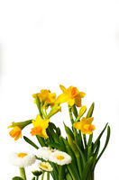 A set of vibrant yellow flowers isolated on white