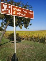 route des vins elsass.JPG