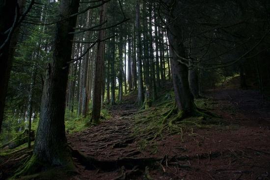 Wald um Volterra