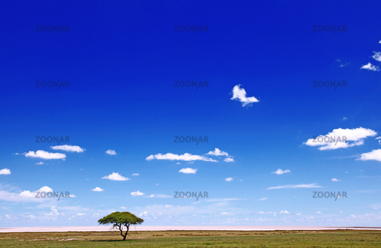 Landschaft an der Etosha-Pfanne, Namibia, landscape at Etosha pan, Namibia