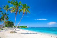 beach and coconut plm tree