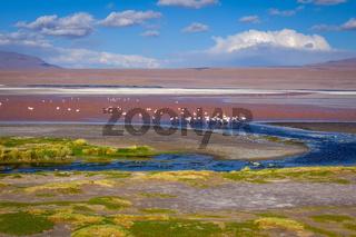 Laguna colorada in sud Lipez Altiplano reserva, Bolivia