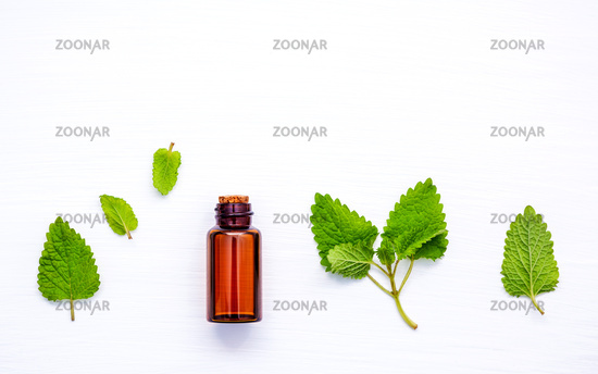 Bottle of essential oil with fresh lemon balm leaves setup with flat lay on white wooden table. Melissa tincture in glass bottle with fresh leaves and copy space.