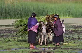 Indiofrauen laden Schilf auf Esel, Quito, Ecuador, Suedamerika, Indio women putting reeds on a donkey, south america