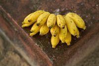 Tasty yellow bananas