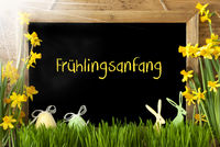Sunny Narcissus, Easter Egg, Bunny, Fruehlingsanfang Means Beginning Of Spring