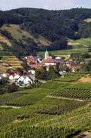 das Weindorf Schellingen im Kaiserstuhl