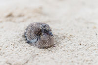 Small baby bird on sand beach