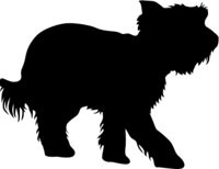 Yorkshire Terrier dog silhouette on a white background