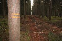 Rückegasse im Wald
