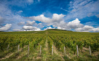 The Grand Cru vineyards of Chablis, Burgundy, France