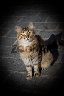 Stray cat is seen  in the street