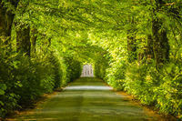 Von Bäumen überdeckte schattige Allee